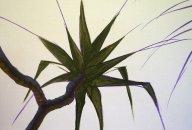Mark Waller's painting pandanus tutorial, blocking in the leaves