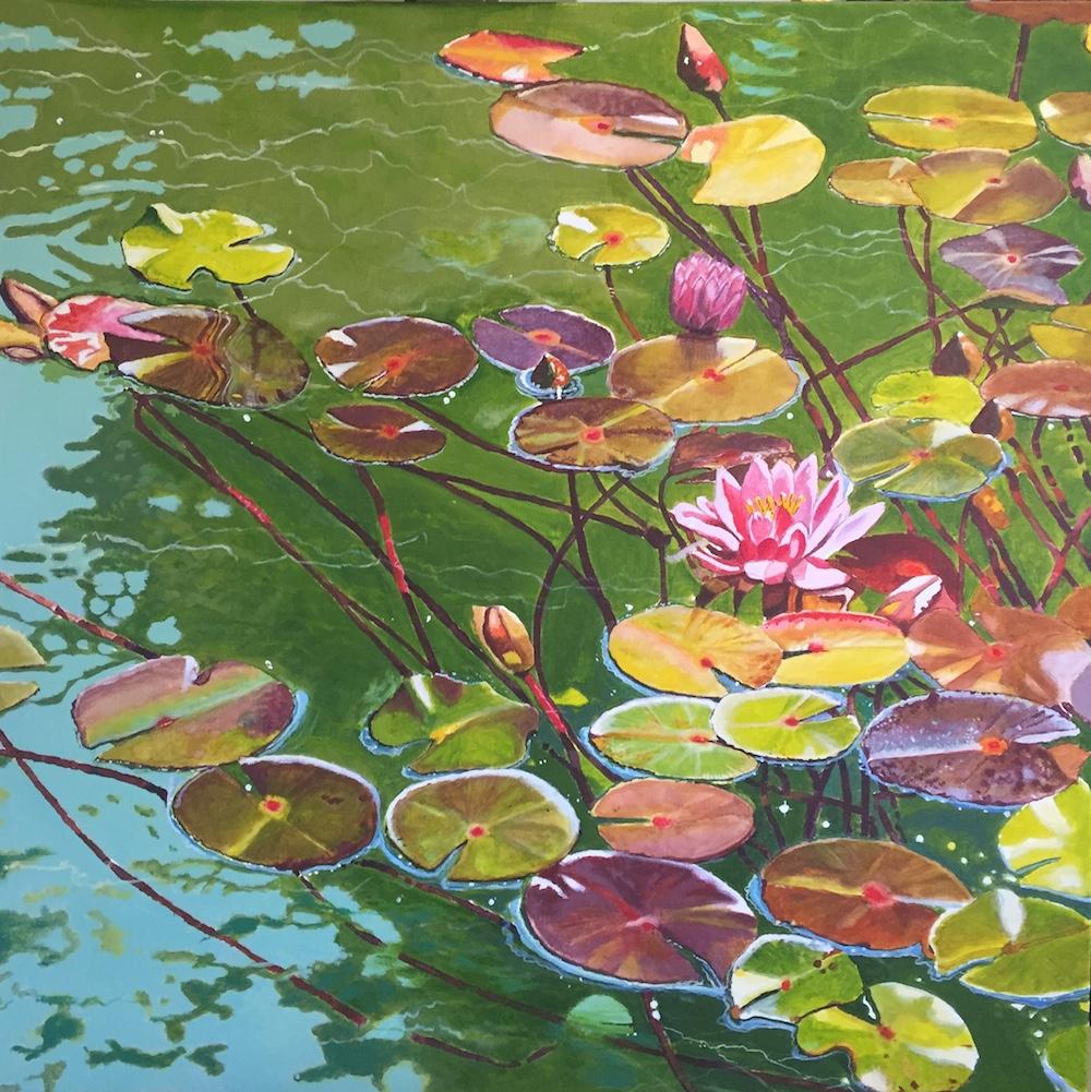 Dick Millott's water lilies