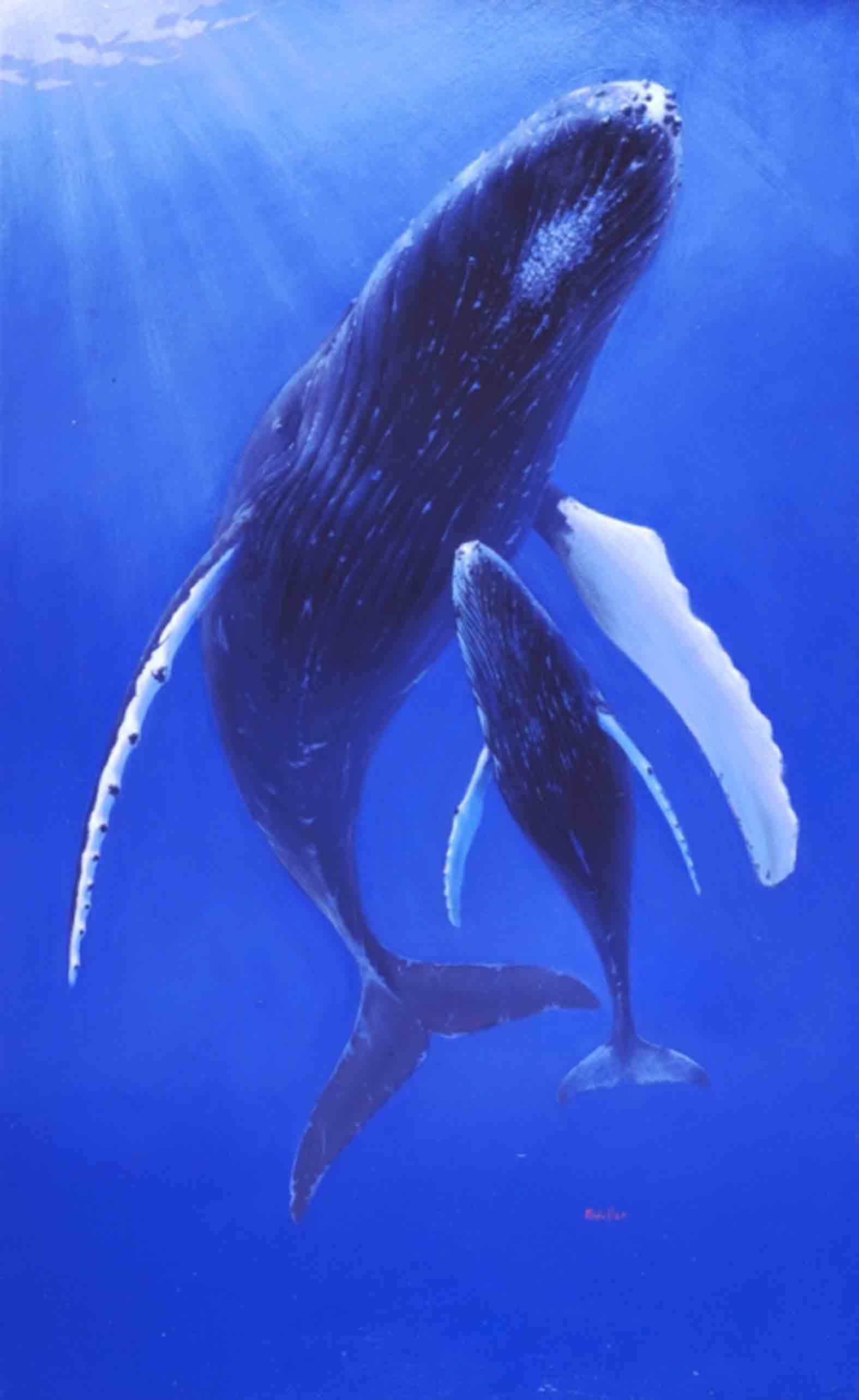 Mark Waller's painting, Blue Embrace, a whale and calf underwater.