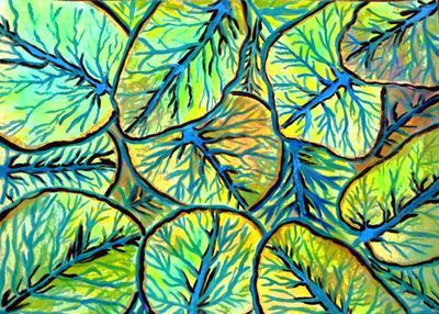 Seagrapes